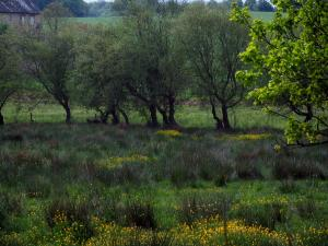 Limousin landscapes - Wild flowers and trees