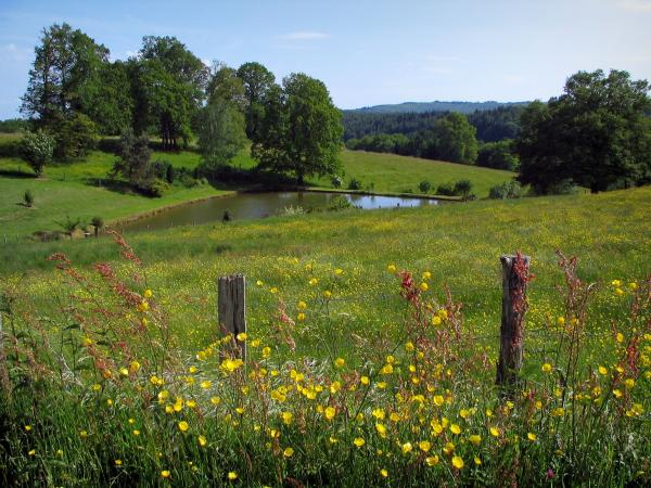 Limousin landscapes - Wild flowers in foreground, fence, prairies, pond and trees
