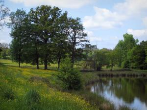 Limousin landscapes - Pond, wild flowers, trees and clouds in the sky, in Basse-Marche