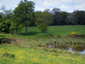 Limousin landscapes - Wild flowers, pond, prairie and trees, in Basse-Marche