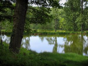 Limousin landscapes - Pond, flowers and trees
