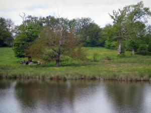 Limousin landscapes - Pond, prairie and trees, in Basse-Marche
