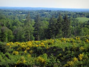 Limousin landscapes - Blooming brooms, trees and forests
