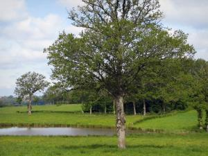 Limousin landscapes - Meadows, pond and trees, in Basse-Marche