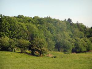 Limousin landscapes - Meadows and forest (trees)