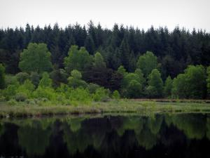 Limousin landscapes - Trees reflecting in a pond