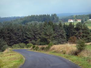 Livradois-Forez Regional Nature Park - Road overhanging a forest of pine trees (fir)