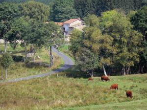Livradois-Forez Regional Nature Park - Cows in a pasture, road lined with trees and houses