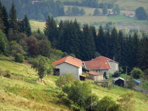 Livradois-Forez Regional Nature Park - Pastures, stone houses, pine trees and trees