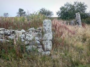 Livradois-Forez Regional Nature Park - Remains of a stone wall, vegetation and tree