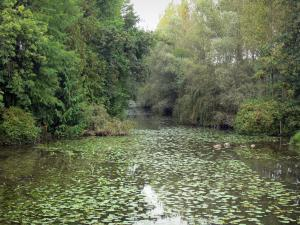 Loir valley - Loir River dotted with water lilies, trees along the water