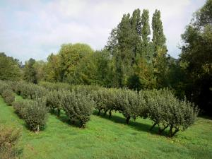 Loire-Anjou-Touraine Regional Nature Park - Meadow with fruit trees (orchard)