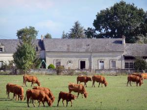 Loire-Anjou-Touraine Regional Nature Park - Cows in a prairie, house and trees