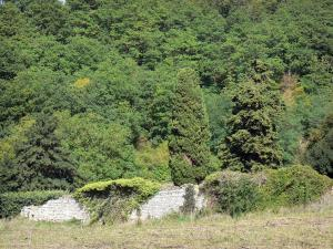 Loire-Anjou-Touraine Regional Nature Park - Stone wall covered with vegetation, trees