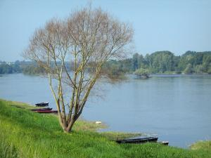 Loire-Anjou-Touraine Regional Nature Park - Flora, tree, boats, the Loire River and the opposite bank with trees (Loire valley)