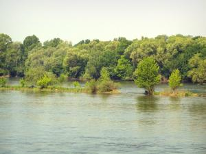 Loire-Anjou-Touraine Regional Nature Park - The Loire River and trees along the water (Loire valley)