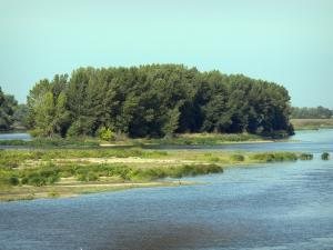 Loire valley - The Loire River, vegetation, island planted with trees and bank in background