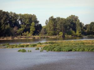 Loire valley - The Loire River, vegetation and bank planted with trees