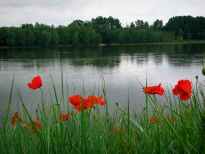 Loire Valley - Poppies (red flowers) and flora in foreground with view of the Loire River and the trees of the opposite bank