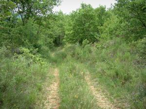 Luberon - Road in a forest (wild flowers and trees)