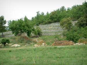 Luberon - Grassland, wood, restanques and trees
