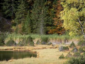 Luitel lake - Luitel lake Nature Reserve: pond, bog, shrubs and trees; in the Belledonne mountains, in the town of Séchilienne