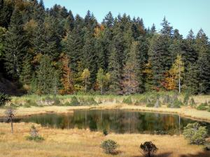 Luitel lake - Luitel lake Nature Reserve: pond, bog, shrubs and trees in autumn; in the Belledonne mountains, in the town of Séchilienne