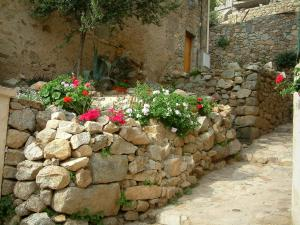 Lumio - Low stone walls of a house with flowers