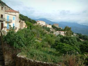 Lumio - Houses in the village and trees (in the Balagne region), hills in background