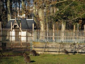 Lyon - Tête d'Or park: kangaroos in the zoo
