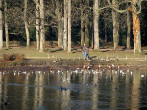 Lyon - Tête d'Or park: lake with water birds, banks with walkers and trees
