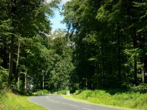Lyons forest - Tree-lined road