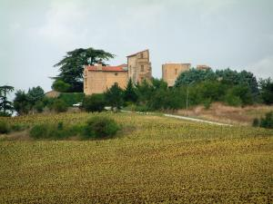 Magrin castle - Pays de Cocagne area: sunflowers field, trees and castle home to the Pastel museum