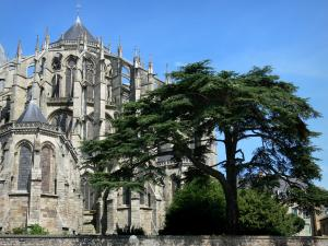 Le Mans - Gothic apse of the Saint-Julien cathedral and cedar of Lebanon