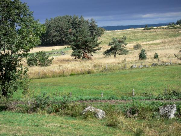 Margeride - Margeride landscape: pastures dotted with trees, stormy sky
