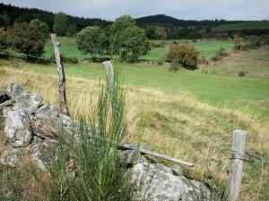 Margeride - Margeride landscape: pastures dotted with trees, stones and fence in the foreground