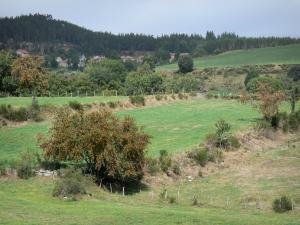 Margeride - Landscape of trees and pasture