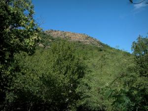 Massif des Maures mountains - Trees, forest and rock faces at the top of a hill