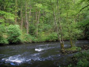 Maulde valley - Maulde river and trees