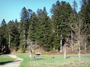 Mazan forest - Picnic area near the forest