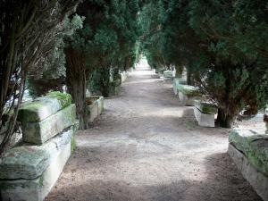 Merovingian cemetery of Civaux - Merovingian cemetery: path lined with sarcophaguses (Merovingian remains) and trees