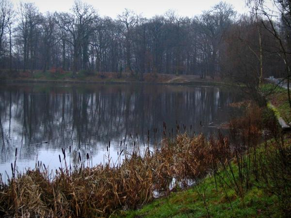 Meudon forest - Pond, reeds, vegetation and trees
