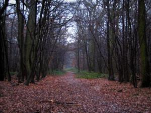 Meudon forest - Trees and ground covered with leaves