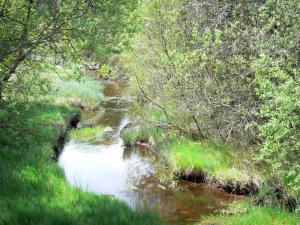 Millevaches in Limousin Regional Nature Park - Millevaches: stream lined with trees
