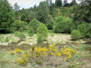 Millevaches in Limousin Regional Nature Park - Millevaches of vegetation