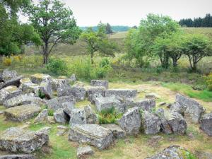 Millevaches in Limousin Regional Nature Park - Millevaches: Roman relics of Cars (funeral together) in a wooded