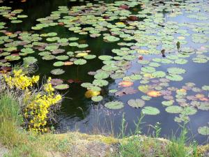 Millevaches in Limousin Regional Nature Park - Millevaches: lily pond of Oussines