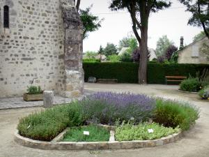 Milly-la-Forêt - Plants of the herb garden and part of the Saint-Blaise-des-Simple chapel