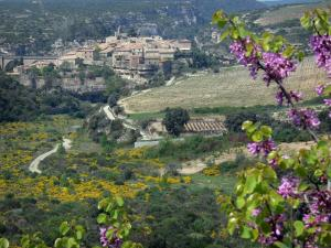 Minerve - Blooming tree in foreground, village on a rocky mountain spur, fields, shrubs, rock faces, in the Upper Languedoc Regional Nature Park