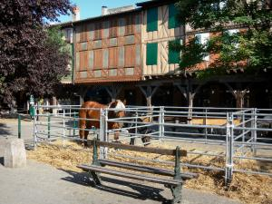 Mirepoix - Medieval bastide town: Festi'cheval (horse festival): horses on the central square (place des couverts)
